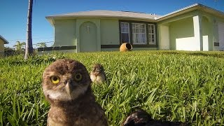 Download GoPro: Owl Dance-Off Video