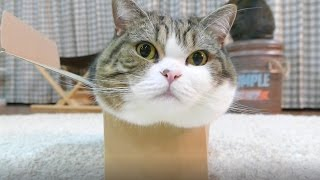 Download 箱とねこ20。-Box and Maru 20.- Video