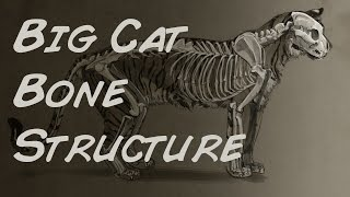 Download Photoshop Illustration Big Cat Bone Structure Time Lapse Video