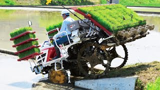 Download Wow! Amazing Modern Asia Agriculture Technology - Wet Rice From Seed To Harvest Process Video