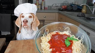 Download Funny Dog Makes Spaghetti: Chef Dog Maymo Video