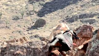 Download Mountain Lion Hunting in Arizona Video