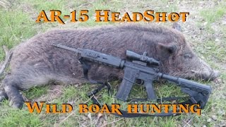 Download Hunting Hogs with AR-15 - Ear Hole Headshot Video