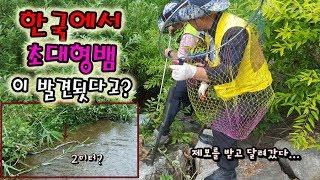 Download 한국에 대형뱀이 나타났다고..?말이 안되지만 실화다..??[정브르] Video