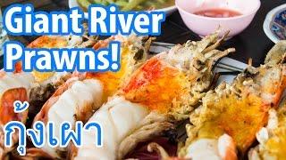 Download Giant River Prawns (กุ้งเผา) in Ayutthaya (Insane Delicious Alert)! Video