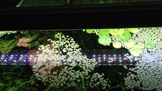 Download Pros and Cons of floating plants Video