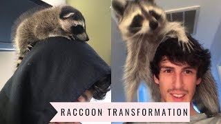Download Raccoon Transformation from Baby to Adult: 1 year update Video