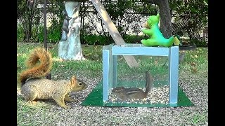 Download A box, a squirrel, and chipmunks Video
