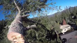 Download Douglas Fir Tree Removal Video