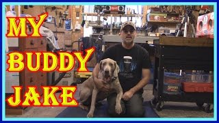 Download JAKE THE WEIMARANER A VERY SMART DOG- SHOULD YOU OWN A BREED LIKE THIS Video
