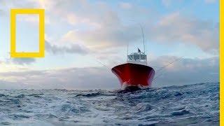 Download سمكة التونة العنيدة : الشمال ضد الجنوب: ينقصنا رجل | ناشونال جيوغرافيك أبوظبي Video