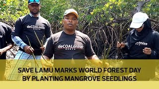 Download Save Lamu marks world forest day by planting mangrove seedlings Video