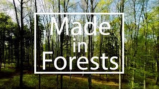 "Download ""Made in Forests"" - a short story about sustainable fashion with Michelle Yeoh Video"