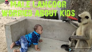 Download Male langoor is worried about kids safety and trying to say Video