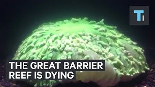 Download The Great Barrier Reef is dying Video