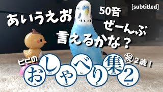 Download あいうえお50音全部言えるかな?【ピピのおしゃべり集 - 第②弾】セキセイインコ(生後2年目)/ My talking budgie sayings. [subtitled] [#055] Video