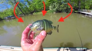 Download New Favorite Swimbait gets DESTROYED! Video