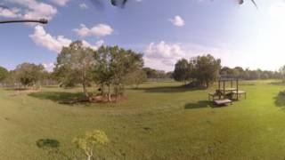 Download Tigers On Vacation In 360!! Video