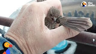 Download Bird Frozen To Metal Fence Rescued by Kind Man | The Dodo Video