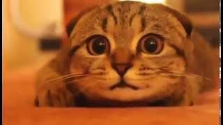Download ホラー映画を見ている猫が超かわいい Super cute cat watching a horror movie Video