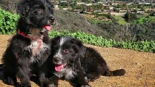 Download Man Rescues Two Abandoned Puppies From Desert, They Went On To Become The Best Road Dogs Ever. Video