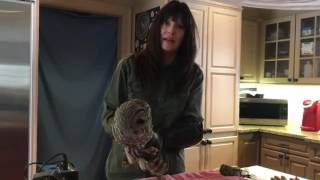 Download Squished Owl On The Mend After Truck Accident Video