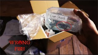 Download They Mistakenly Sent Me Monster Fish...Live Fish Unboxing Video