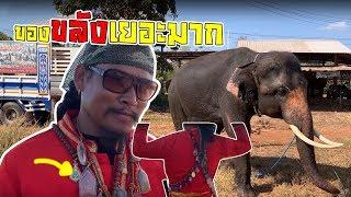 Download พี่เล็ก ″ควาญช้างขลัง″ ยังไงไปดู elephantV*-* Video