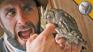 Download SLEEPY OWL BITES ME?! Video