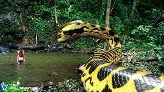 Download VIDEOBUSTER.de zeigt PIRANHACONDA - Anaconda und Piranha! deutscher Trailer HD zur DVD & Blu-ray Video