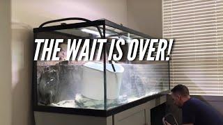 Download Setting up my NEW Aquarium! | Jay Wilson Video
