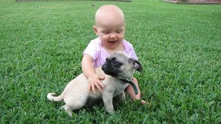 Download Funny Pug and Baby Video Compilation 2015 Video