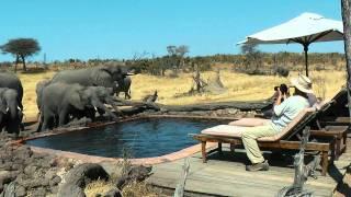 Download Elefanten am Pool Video
