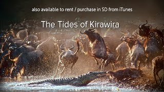 Download The Tides of Kirawira - OFFICIAL Video