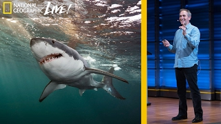 Download Great White and Oceanic Whitetip Sharks: Photographing Top Ocean Predators (Part 3) | Nat Geo Live Video