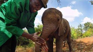 Download GoPro: Orphan Elephants From Kenya Video