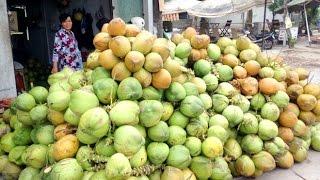 Download Cô gái nông thôn bán dừa siêu đẳng | VTC Video