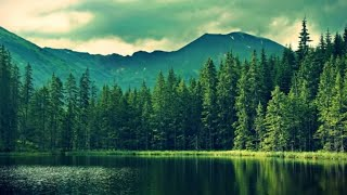 Download Top 10 largest Forests in the world Video