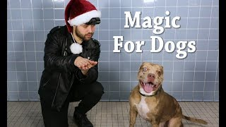 Download Magic for Animal Shelter Dogs | TBS Video