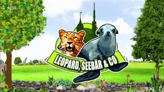 Download Folge 2 - Staffel 4 - Leopard, Seebär & Co. - Folge 122 - Nachwuchs im Elefantenhaus [ HD ] Video