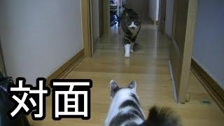 Download 先住猫と子猫を対面させてみた Video