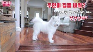 Download 주인이 집을 비운 사이 강아지들이 뭘하나 봤더니??? (반려견 분리불안??) Video