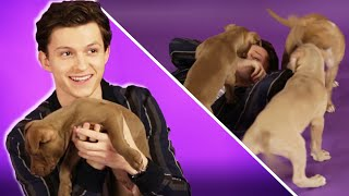 Download Tom Holland Plays With Puppies While Answering Fan Questions Video