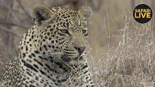 Download safariLIVE - Sunrise Safari - October 9, 2018 Video
