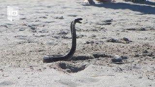 Download 10 Playas más peligrosas del mundo Video