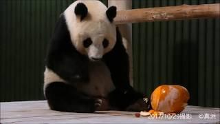 Download ハロウィン☆パンダの旦旦(タンタン) 神戸市立王子動物園 Video