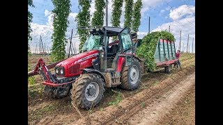 Download Hopfenernte 2018 | Hop Harvest | Massey Fergusson 5438 | Hop Zbiorów Video
