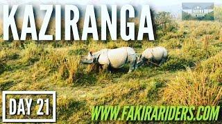 Download DAY 21 | Kaziranga National Park Video