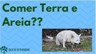 Download Animal Comendo Terra, Areia Cimento e Raspando Parede Será Vermes? - Dica do Veterinário Video