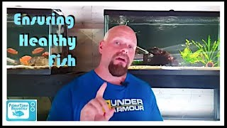 Download How to Quarantine Fish - What We Do Video
